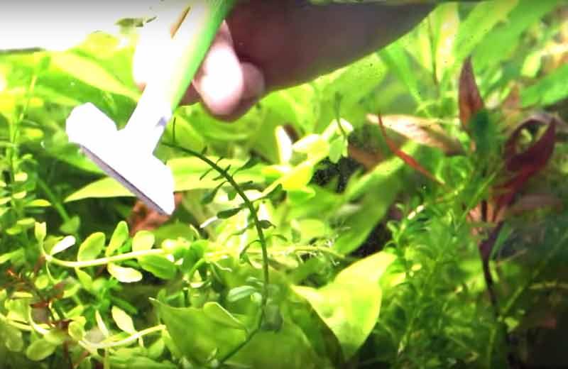 Как чистить домашний аквариум