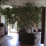 Окружите себя комнатными растениями, они заменят вам отдых на природе