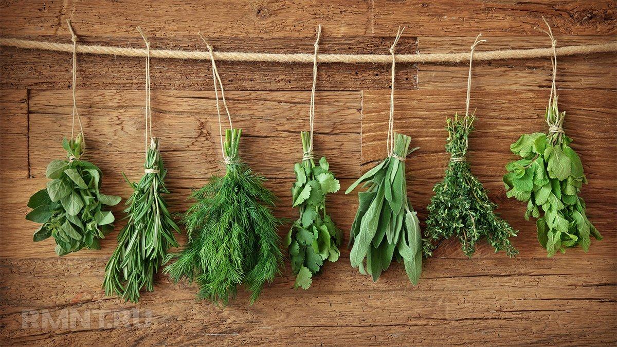 Как засушить зелень на зиму